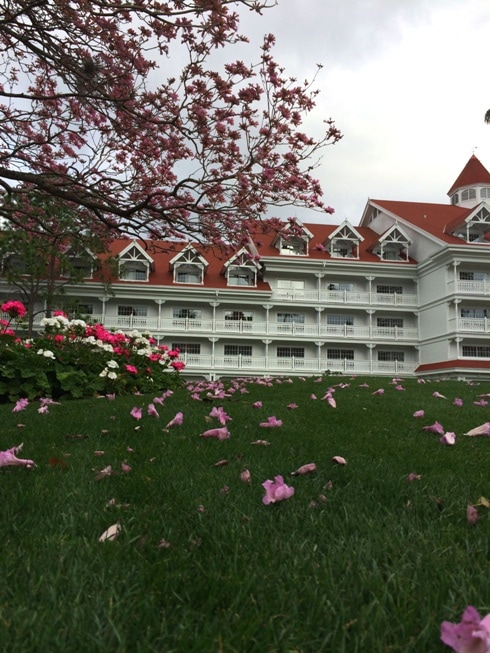 Pink Flowering Tree at Grand Floridian Resort at Walt Disney World in Orlando Florida