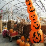 Indoor Pumpkin Maze and Fall Fun at Linda's Plants