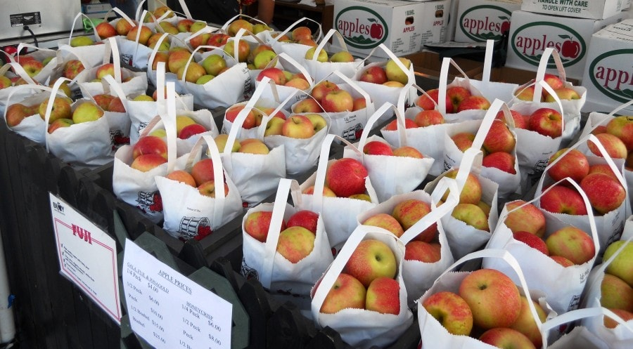 apples-at-festival-9.2011-e1315499974207