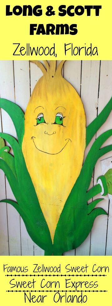 An agritourism farm visit is fun at Zellwood's Long and Scott Farms in Florida. Ride the Sweet Corn Express to learn about the farm, and shop at the farm stand.