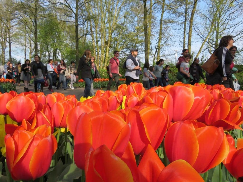 Keukenhof Gardens Amsterdam Netherlands Tulips Crowds Tulip Fields