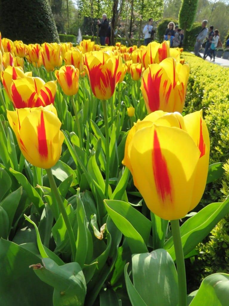 Keukenhof Gardens Amsterdam Netherlands Tulips
