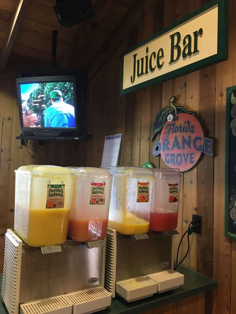 Free Samples of Orange Juice Florida's Natural Visitor Center Grove House