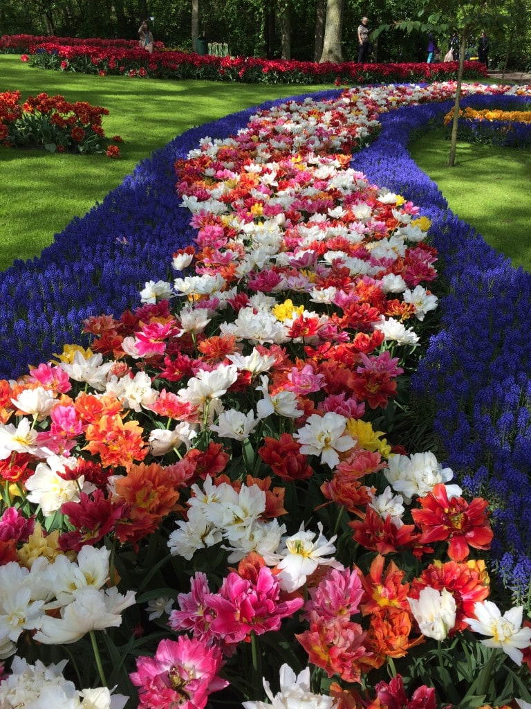 Keukenhof Gardens Amsterdam Netherlands Tulips Less Crowded Tulip Fields