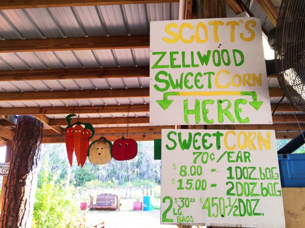 Long & Scott Farms is a fun place for the entire family in central Florida. Hop onboard a wagon train, shop the large farmer's market farm stand, and pick up some Zellwood Sweet Corn, the only place that it's grown in the world.