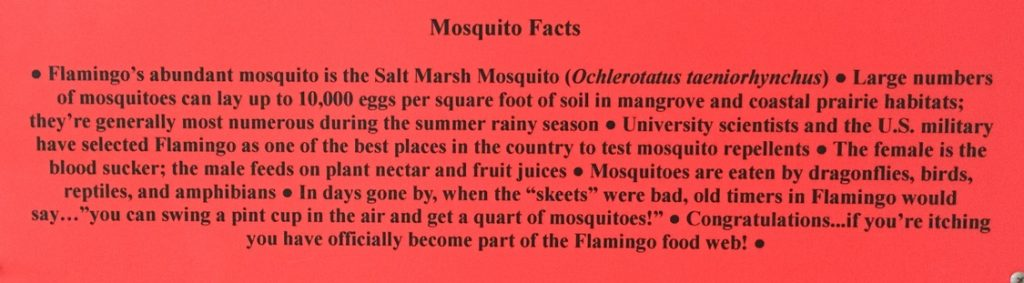 Mosquito facts from one of the world's biggest mosquito concentrations. Flamingo, Florida in Everglades National Park.