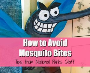 How to Avoid Mosquito Bites: Tips from Everglades National Park staff