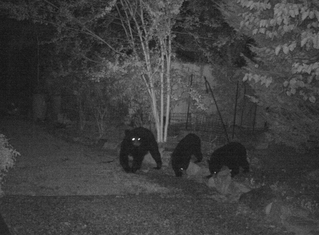 protect yourself from bears in your yard kim and carrie