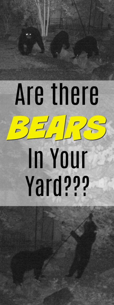 Bears in your backyard? Seen them - or just wondering? Here's how to tell if you have bears in your yard. Tips on how to protect yourself from bears at home, too.