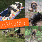 Natural Premium Pet Supplements: My Dog's Love Zesty Paw's!