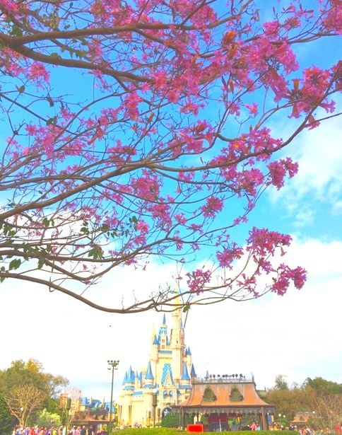 Pink Flowering Tree in front of Magic Kingdom Castle