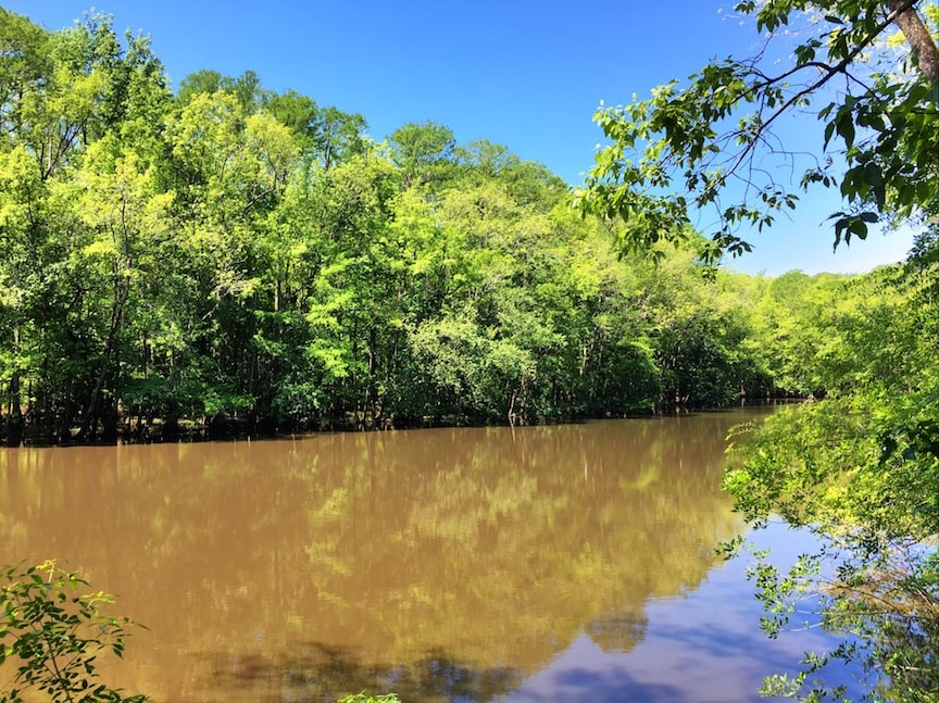 brown Congaree River against bank of green trees and blue sky