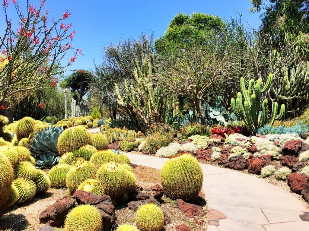 Cactus Garden Huntington Gardens Pasadena California