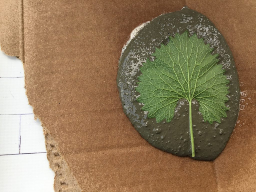 big green leaf in wet grey cement on brown cardboard