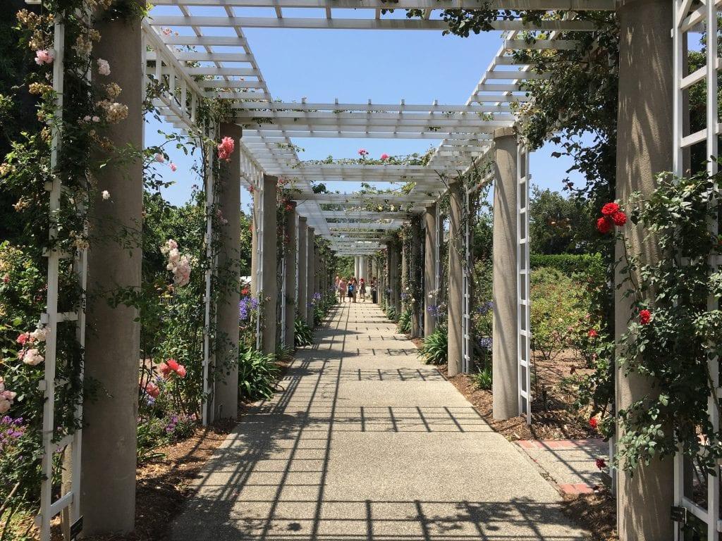 Rose Garden Trellis Huntington Gardens Pasadena California