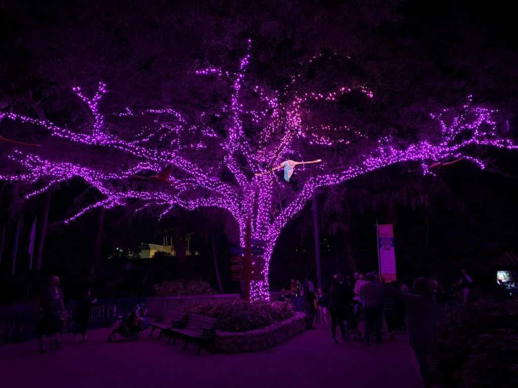 Busch Gardens Christmas Town Pink Flamingo Tampa Bay