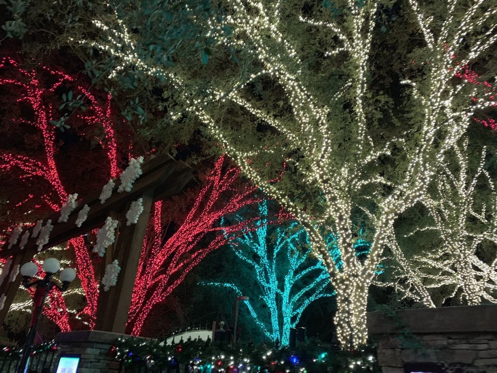 Red white and blue Christmas lights in trees at Busch Gardens Tampa Bay