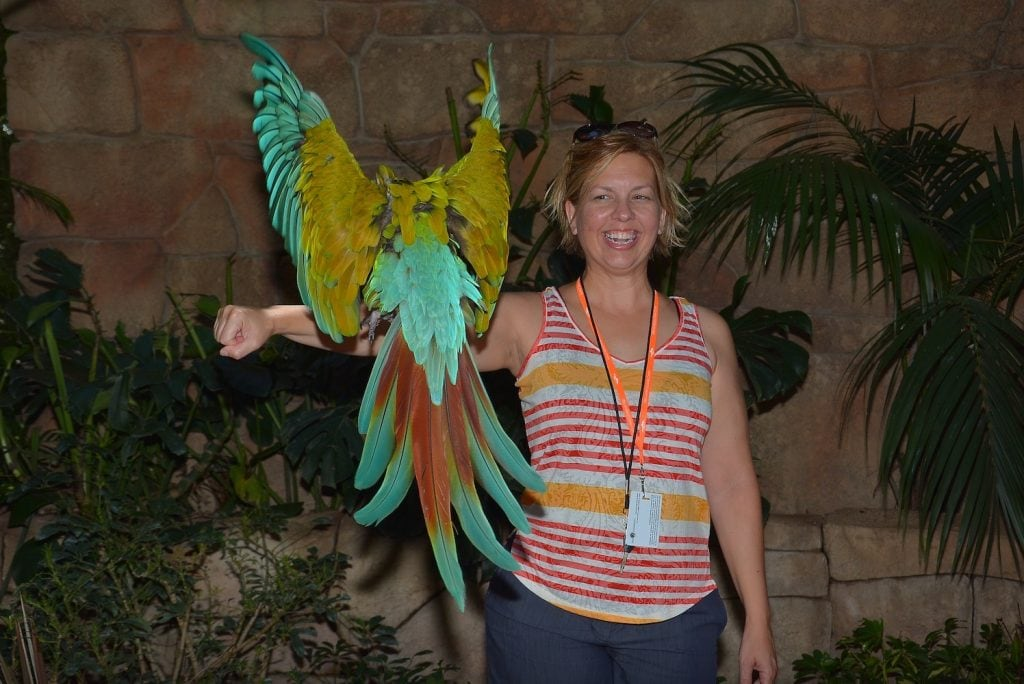 woman with bright colored parrot flying towards her Discovery Cove