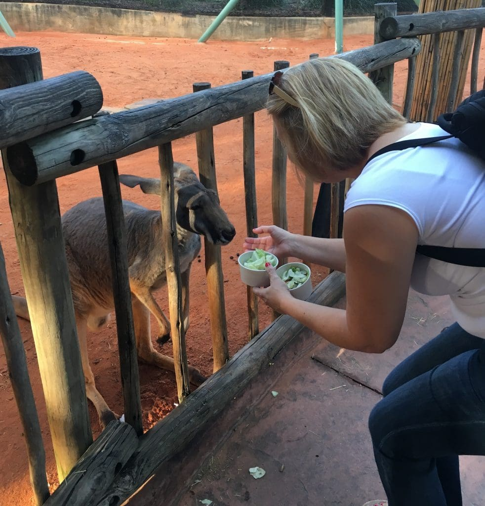 woman feeding a kangaroo