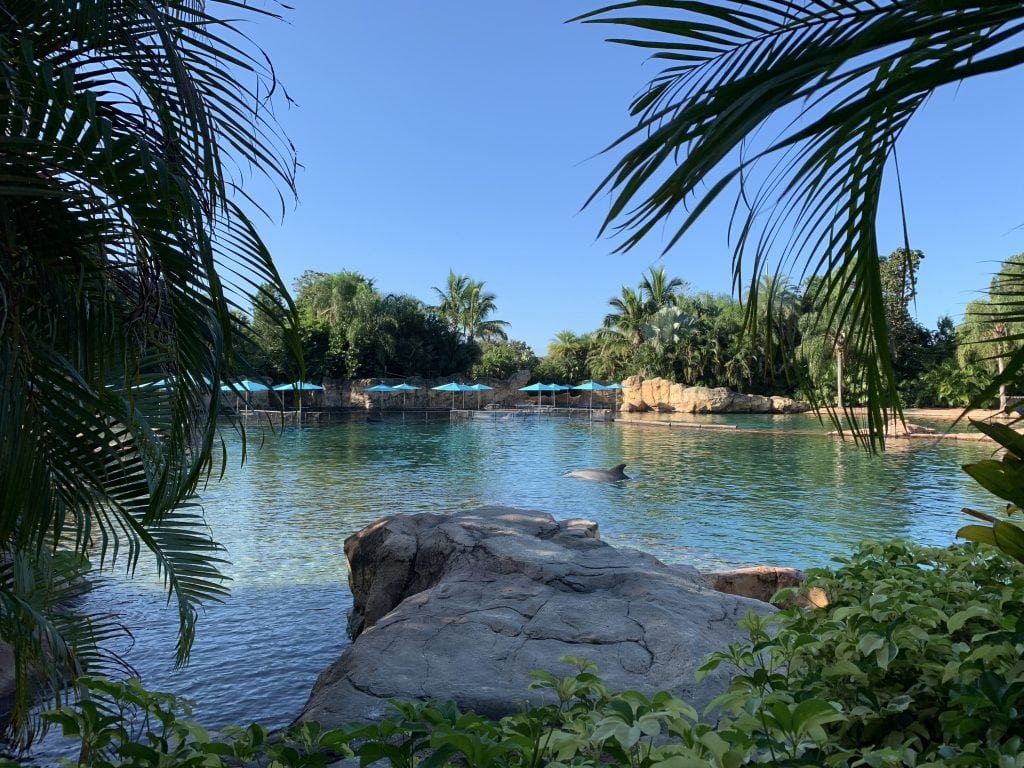 view of dolphin lagoon private cabana discovery cove