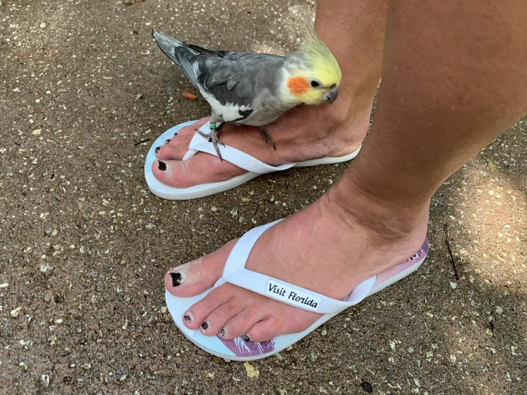 Bird on woman's foot wearing flip flops Discovery Cove Orlando