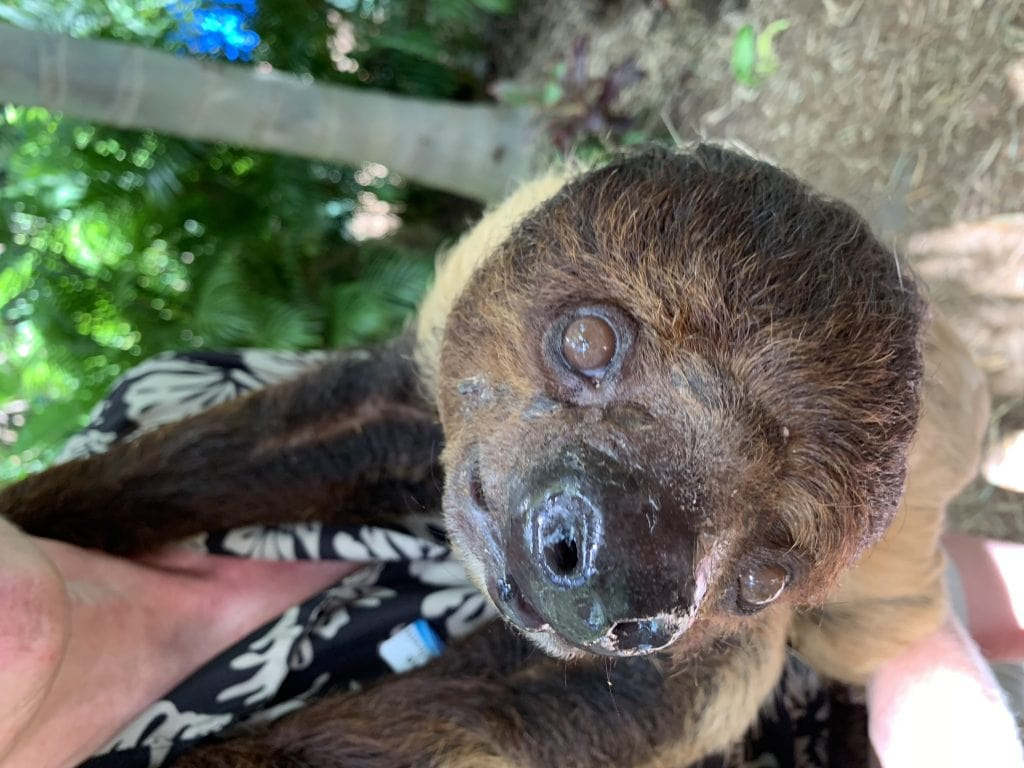 sloth at discovery cove orlando florida