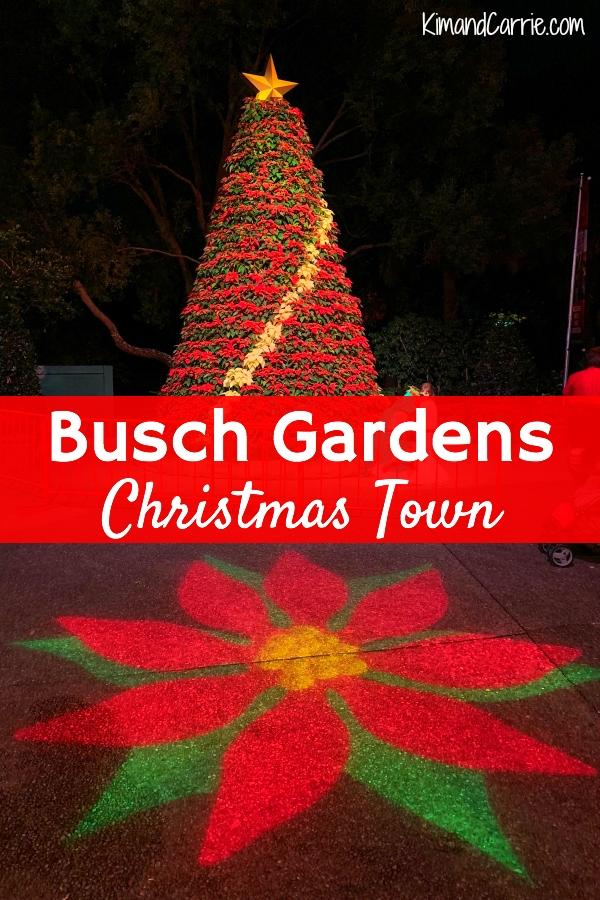 Poinsettia Tree Busch Gardens Christmas Town Tampa Bay