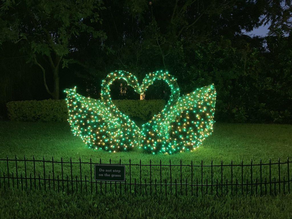 Swans Busch Gardens Christmas Town Tampa Bay