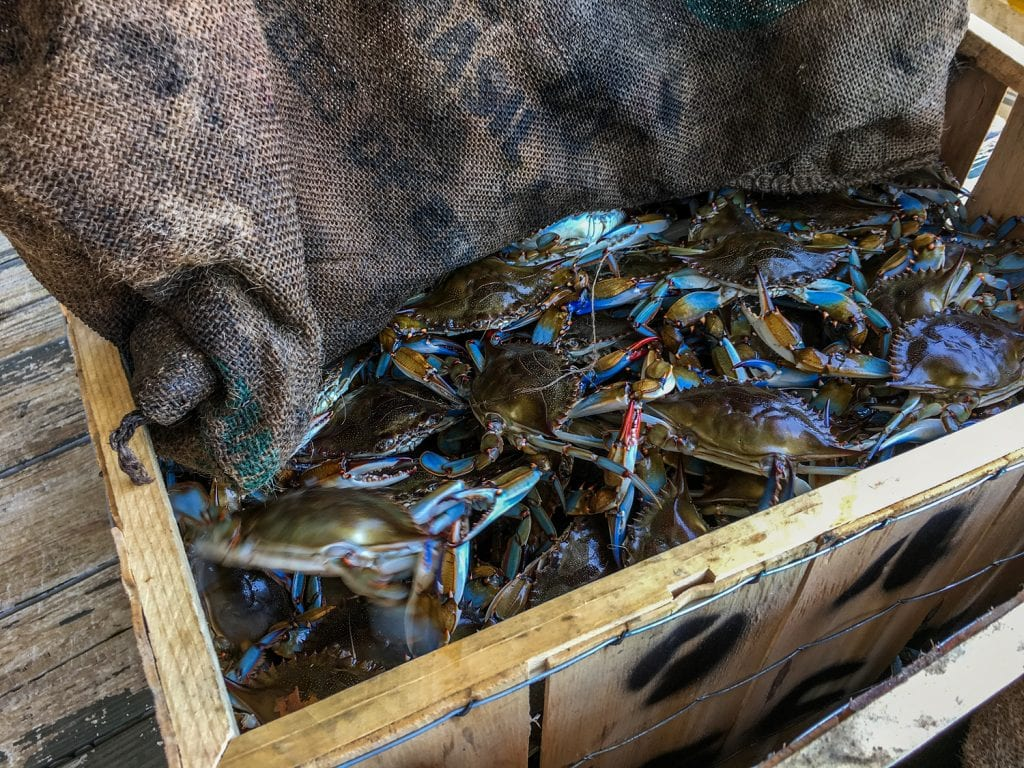 blue crabs in wooden box peace river seafood Punta Gorda fl