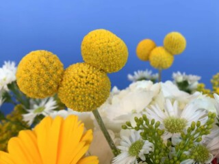 Yellow Mickey Mouse Flowers in floral bouquet against blue background