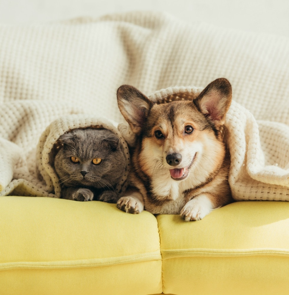 cat and dog under blanket on couch