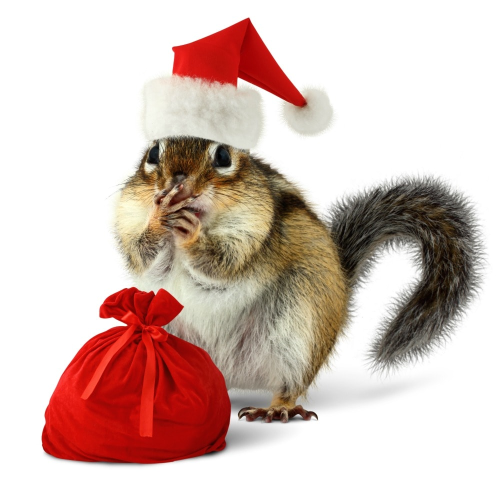 chipmunk wearing Santa hat with a tiny red bag of gifts