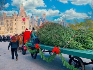 real christmas tree on wagon pulled by horses