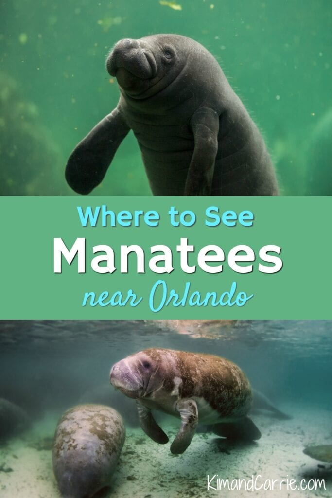 manatees in water Orlando Florida