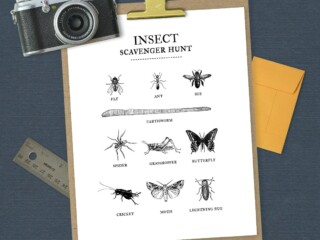 insect scavenger hunt printable on navy background