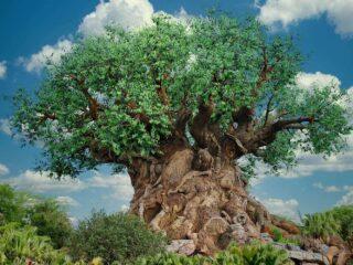 tree of life icon Disney animal kingdom