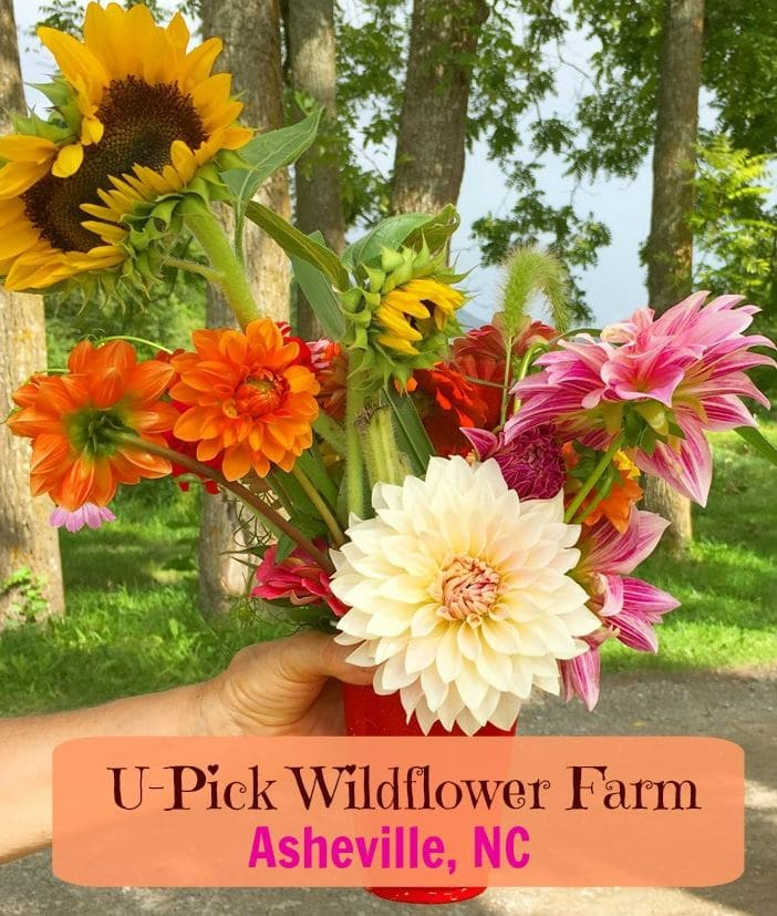 pick your own wildflowers in Asheville, NC