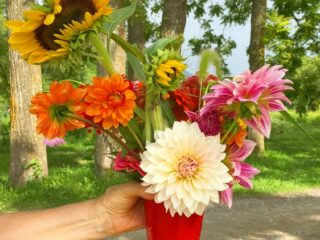 red solo cup filled with picked wildflowers
